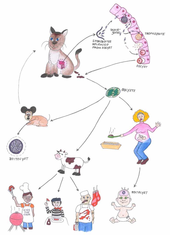 паразиты человека википедия